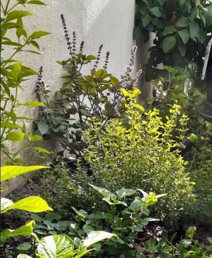 Jardinagem sustentável.